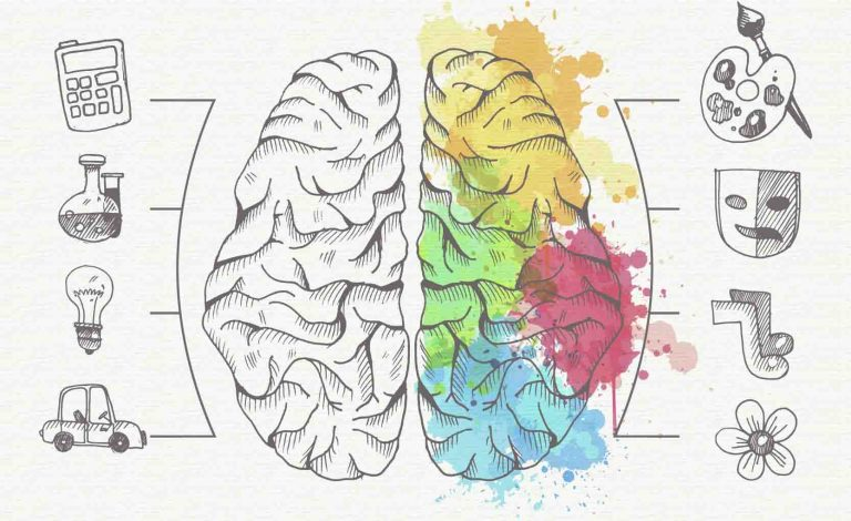 Cerebro que muestra su parte derecha de colores y las habilidades que se desarrollan desde esa parte: arte, música, dibujo, etc. y en su lado izquierdo: matemáticas, ciencia, técnica, etc.